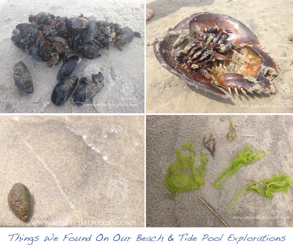 Wildwood days exploring tide pools at our favorite wildwood beach beachfindings nvjuhfo Images