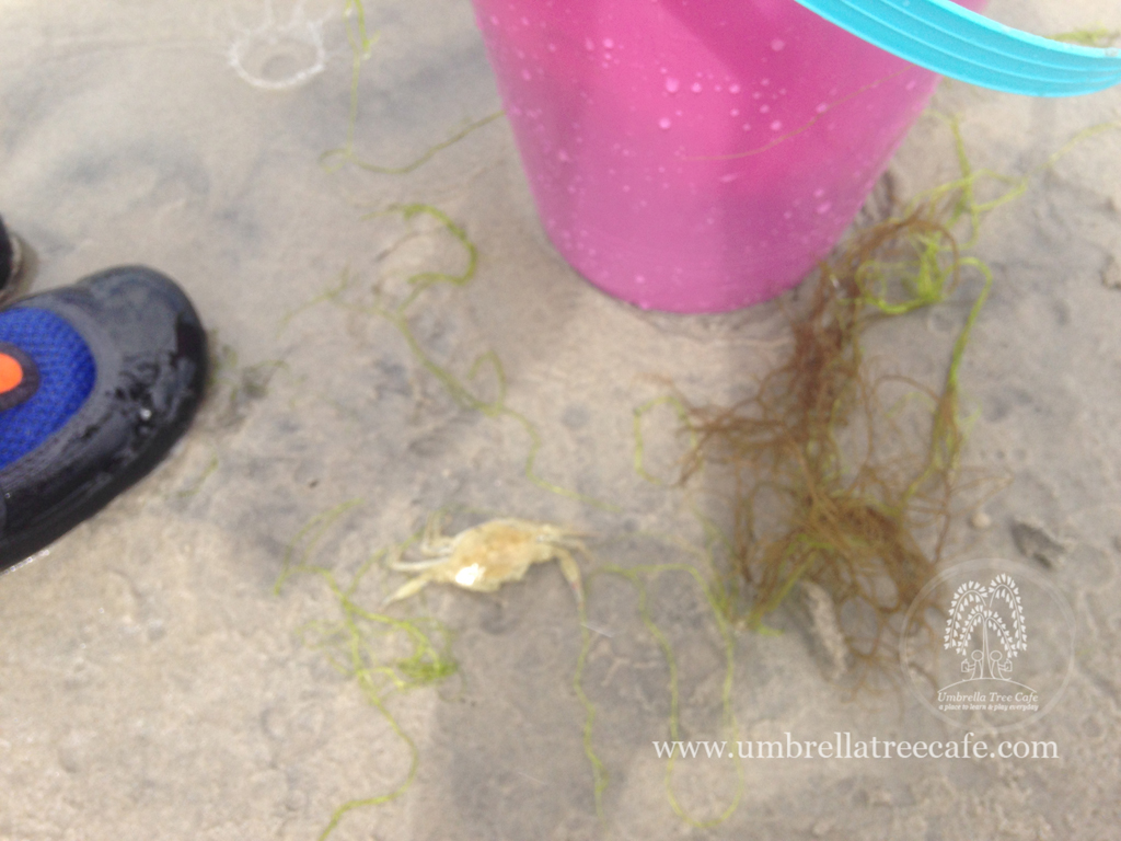 Wildwood days exploring tide pools at our favorite wildwood beach what to bring when exploring tide pools nvjuhfo Images