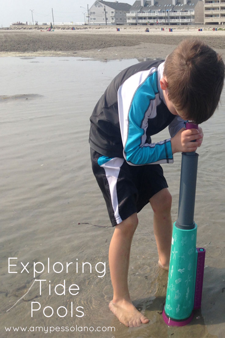 Wildwood days exploring tide pools at our favorite wildwood beach exploringtidepools nvjuhfo Images