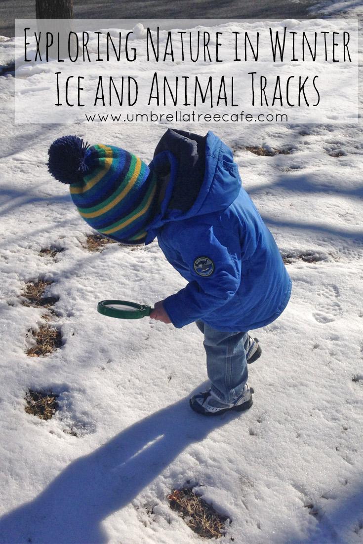 ice-and-animal-tracks