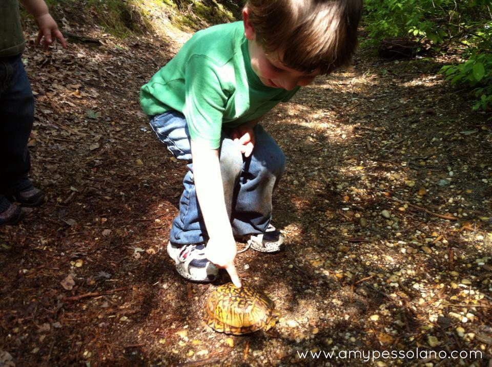 findingturtle